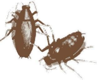 20100908065604-cucarachas.jpg