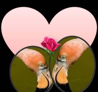 20110626055550-flamencos-rosa.jpg