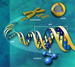 20110705091517-8.-genoma.jpg