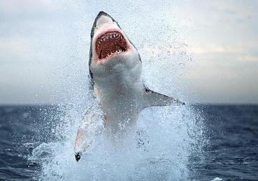 20110806054121-tiburonn-644x362.jpg