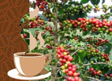 20120613051509-produccion-cafe-cuba.jpg