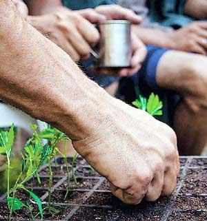 20140202232519-marihuana-uruguay.jpg