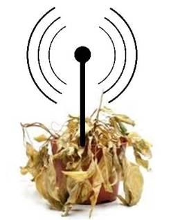 20140208233825-wifi-dana-plantas.jpg