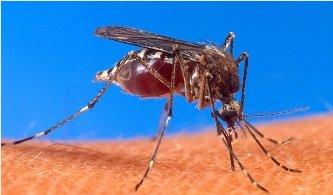 20140406125110-dengue.jpg