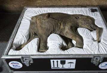 20140525061245-mamut-llega-a-londres.jpg