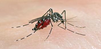 20140529113529-fiebre-chikungunya.jpg