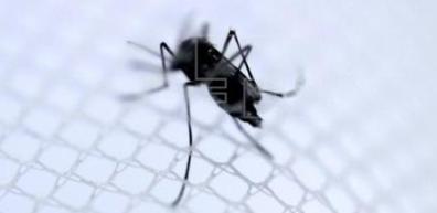 20140706055015-mosquito-viruschikungunya.jpg
