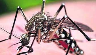 20140816143324-mosquitos-aedes-aegypti-alg.jpg