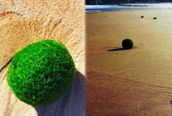20140922140742-huevos-verdes-playa-austral.jpg