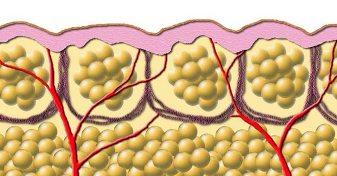 20150108002701-celulas-grasas-nos-protegen-contra-infecciones.jpg