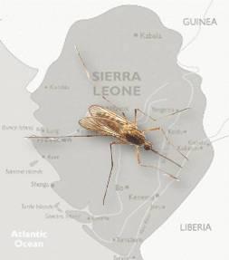 20150119132300-sierra-leona-africa-paludismo.jpg
