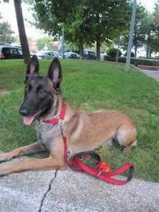 20150310111441-perro-que-detecta-el-cancer-tiroides-foto-servicios-depec.jpg