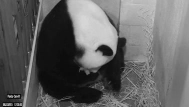 20150825015330-osa-panda-dos-crxas.jpg-1718483346.jpg
