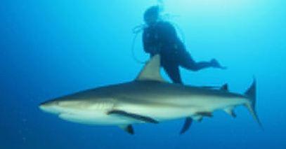 20151118042459-ciencias-del-mar-tiburones-cuba-eeuu.jpg