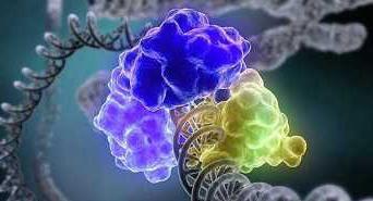 20160117135758-cromosoma-femenino.jpg