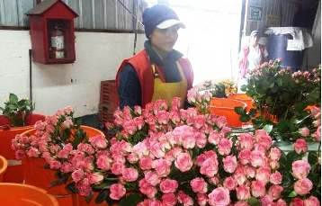 20160214194217-rosas-ecuatorianas.jpg