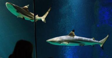 20160814005238-tiburones.jpg