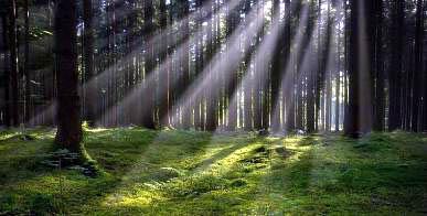 20170227022910-mas-bosques-en-cuba.jpg