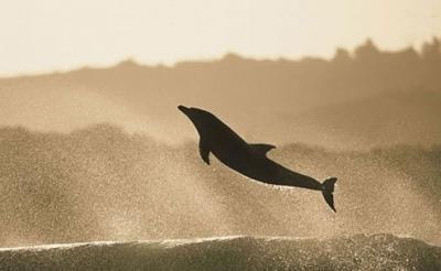 20100222055521-delfines-.jpg