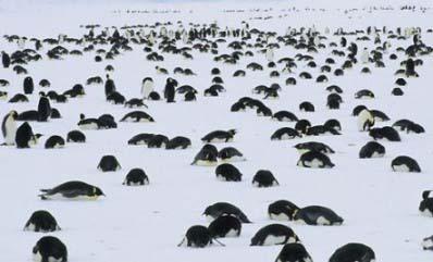 20110129073157-8.muerte-masiva-de-pinguinos.jpg