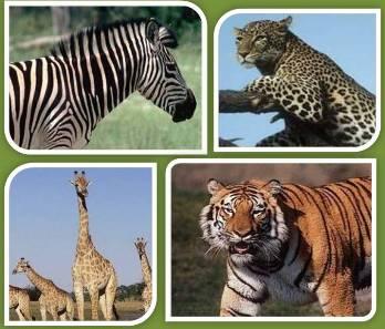 20110705090538-5.-animales-de-la-selva.jpg
