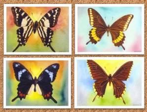 20110705091125-9.-mariposas-tony.jpg