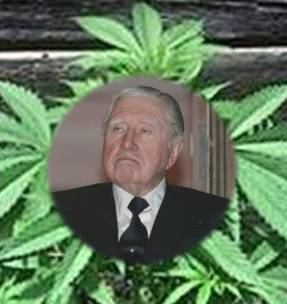 20110707094031-pinochet-marihuana-predios.jpg