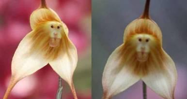20120627122523-orquideas-mono.jpg