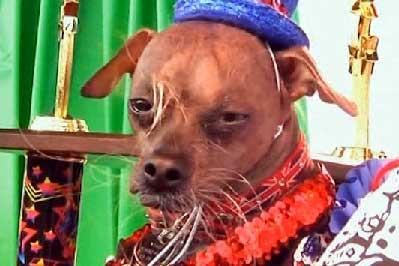 20120709155328-el-perro-mas-feo-2012.jpg