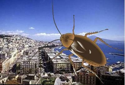 20120716021649-cucarachas-napoles.jpg