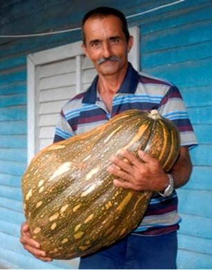 20120921225113-calabaza-cubana-gigante.jpg