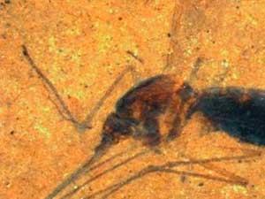 20131020131133-fosil-mosquito.jpg