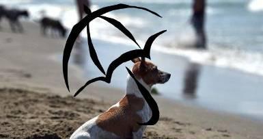 20140822135231-playa-de-perros.jpg