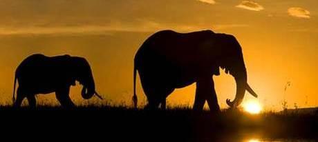 20140921133628-elefantes-africanos.jpg