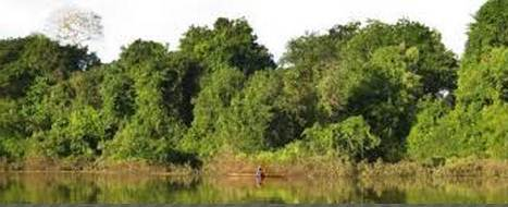 20150322143734-co2-bosques-disminucion.jpg
