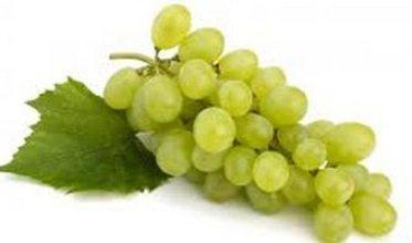 20150523015945-uvas-transgenicas-chile.jpg