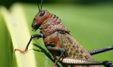 20150731133741-grasshopper-362361-1280.jpg