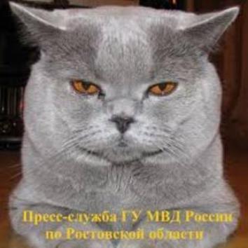 20151118045125-gato-policia-ruso.jpg