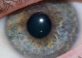 20151224053656-eye.jpg