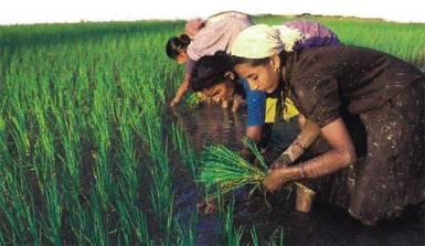 20151228012355-pakistan-arroz.jpg