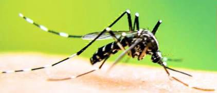 20160209102845-mosquito-vector-dengue.jpg