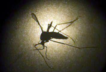 20160216132406-zika-genoma.jpg