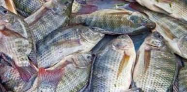 20160229015656-peces-omega3.jpg