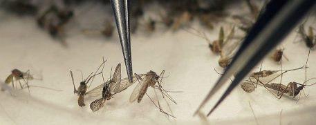 20160913021124-mexico-comercializa-primera-vacuna-contra-dengue.jpg