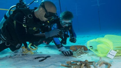 20170406002949-buzos-de-cuba-y-ee.uu.-construyen-en-la-isla-vivero-de-coral-.jpg