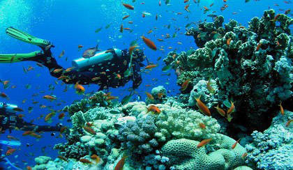 20170622031604-concluye-investigacion-en-arrecifes-coralinos-cubanos.jpg