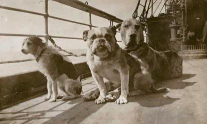 20170711171814-los-perros-del-titanic.jpg