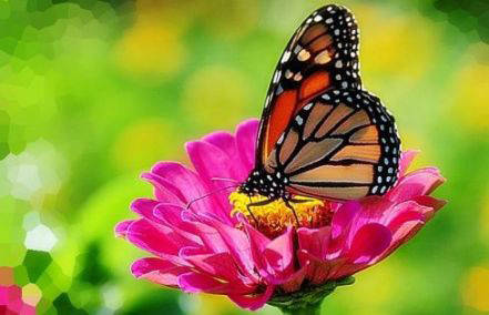 20171105010008-mariposa-monarca-.jpg