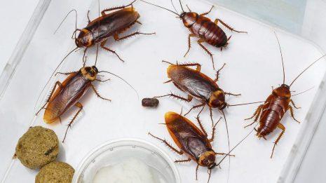 20180117181840-donde-viven-las-cucarachas.jpg