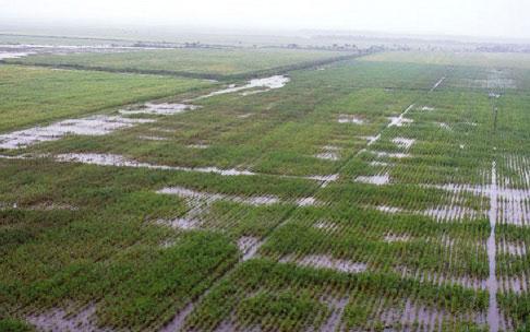 20180529202250-inundaciones-cultivos.jpg